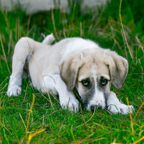 Symptoms of Worms in Dogs